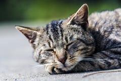 Chat de sommeil Photo stock