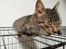 Chat de sommeil Photo stock