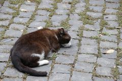 Chat de sommeil Brown sur Roman Road Photo stock