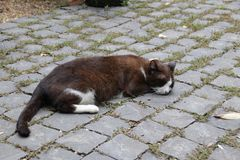 Chat de sommeil Brown sur Roman Road Images stock
