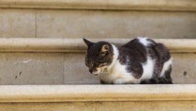 Chat de sommeil sur des escaliers Photographie stock libre de droits