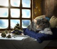 Chat de sommeil sur la composition en concept de fond de fenêtre d'hiver Image libre de droits