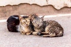 Chat de sommeil sur la rue concrète Photos libres de droits