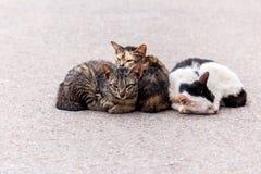 Chat de sommeil sur la rue concrète Photo stock