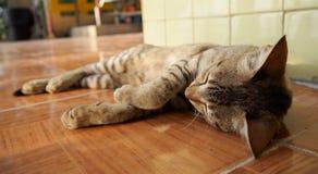 Chat de sommeil sur le plancher photos libres de droits