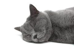 Chat de sommeil sur un plan rapproché blanc de fond Photos libres de droits
