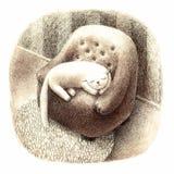 Chat de sommeil sur une chaise Images stock