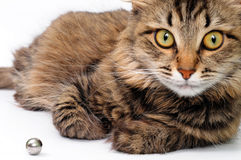 Chat de Tabby photographie stock