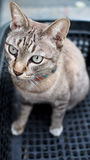 Chat de Tabby regardant l'appareil-photo Photographie stock
