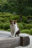 chat de temple de Konpuku-JI - Kyoto Image stock
