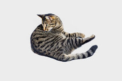 Chat de tigre mignon Photo libre de droits