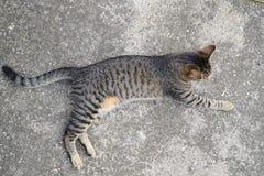 Chat de tigre se trouvant sur un plancher en béton, d'en haut Image stock