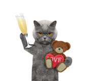 Chat de Valentine avec l'ours d'isolement sur le blanc Image stock
