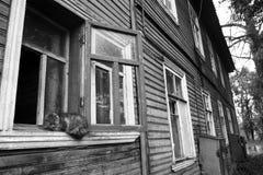 Chat de village Photographie stock