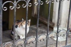Chat derrière la barrière de fer photographie stock