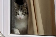Chat derrière la fenêtre Images libres de droits