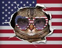 Chat derrière le drapeau des Etats-Unis illustration libre de droits