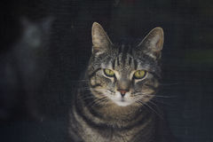 Chat derrière une porte de fil Photo stock