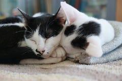 Chat deux dormant ensemble Photographie stock libre de droits