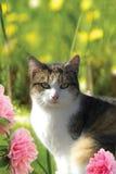 Chat domestique à la maison avec des fleurs image libre de droits