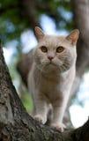 Chat domestique grimpant à un arbre photo libre de droits