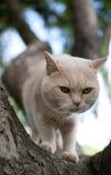 Chat domestique grimpant à un arbre II photo stock