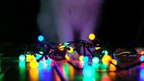 Chat domestique jouant avec les guirlandes de fête sur le plancher clips vidéos