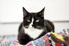 Chat domestique noir et blanc, mensonge à la maison, détente et calme Images libres de droits