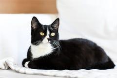 Chat domestique noir et blanc, mensonge à la maison, détente et calme Images stock