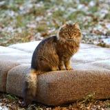 Chat domestique pelucheux se reposant sur un divan jeté image stock