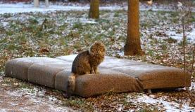 Chat domestique pelucheux se reposant sur un divan jeté photos libres de droits
