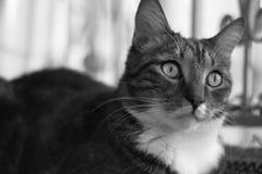Chat domestique rayé aux cheveux courts mûr se trouvant sur une couverture sur le balcon Photographie stock
