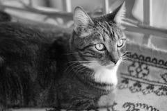 Chat domestique rayé se trouvant sur une couverture sur le balcon Images stock