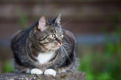 Chat domestique se reposant dehors près du mur en bois Photographie stock libre de droits