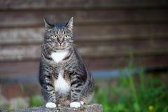 Chat domestique se reposant dehors près du mur en bois Photo stock