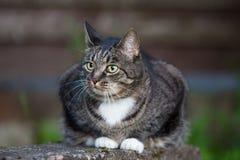 Chat domestique se reposant dehors près du mur en bois Photos stock