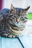 Chat domestique sur le banc en bois peint Photo stock