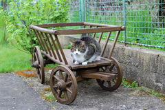 Chat domestique sur un chariot Photos libres de droits