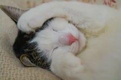 Chat dormant avec la patte pour couvrir son visage sur la couverture blanche image stock