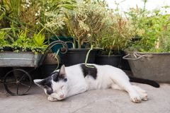 Chat dormant dans le jardin Photo libre de droits