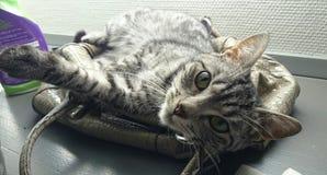 Chat dormant sur la bourse de la femme Images stock