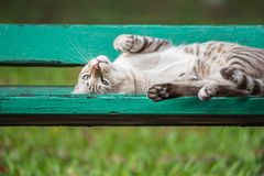 Chat dormant sur la chaise en bois au parc avec la nature photo libre de droits