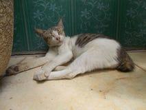 Chat dormant sur le plancher Photographie stock