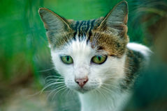 Chat doux Photos libres de droits