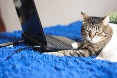Chat dr?le mignon avec l'ordinateur portable sur le sofa ? la maison, fond bleu photographie stock libre de droits