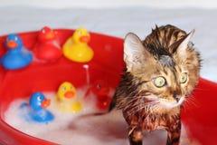 Chat drôle prenant un bain photos libres de droits