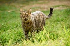 Chat drôle sur l'herbe images stock