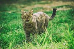 Chat drôle sur l'herbe photo stock