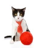 Chat drôle avec la boule se reposant dans l'avant D'isolement sur le blanc Photographie stock libre de droits