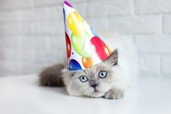 Chat drôle dans un chapeau d'anniversaire photos libres de droits